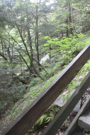 Dansville, NY: Stony Brook State Park - View of the 3rd Falls from the stairs