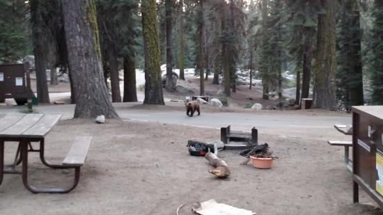 Stony Creek Campground: bear