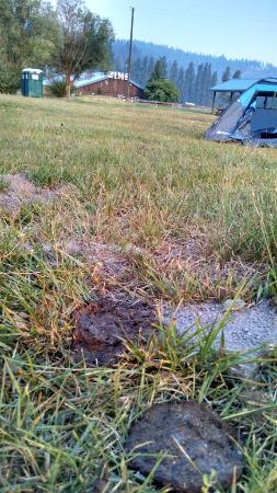 New Meadows, ID: Cow flops included