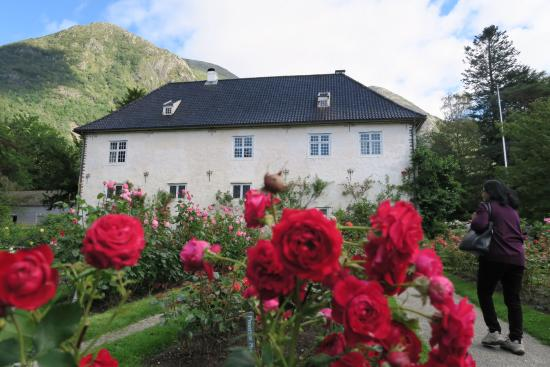 Rosendal, Norway: Beautiful roses!