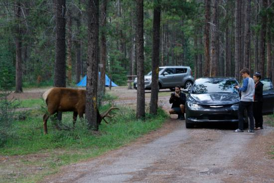 Whistlers Campground Jasper, Alberta  Campground Reviews