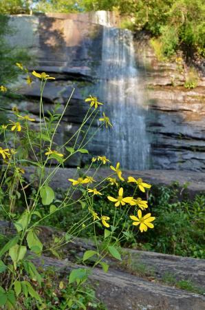 Sunset, SC: Flowers at Twin Falls