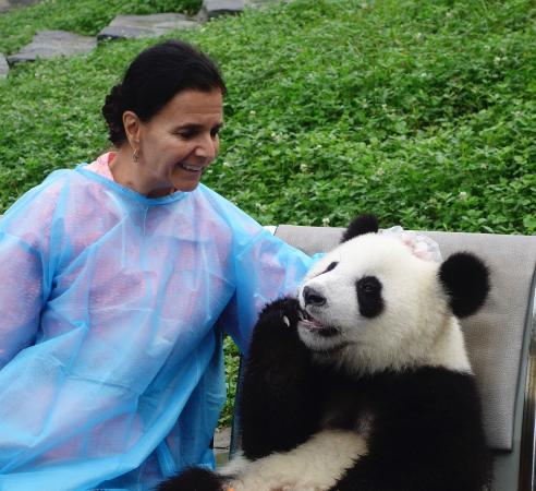 Wenchuan County, China: scratching panda's head while he nibbles on his carrot