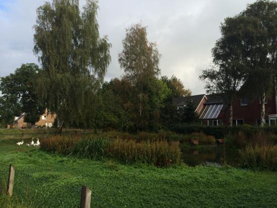 Tornesch, Germany: A pond with geese near the hotel