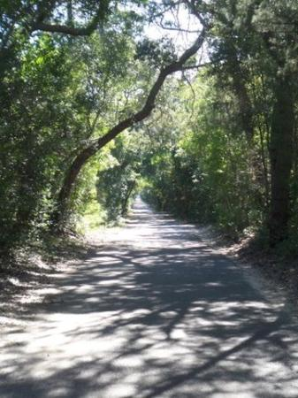 Bald Head Island, NC: Federal Road, BHI
