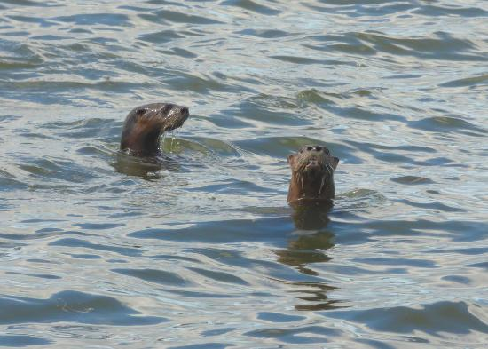 Нью-Смирна-Бич, Флорида: Otters were in the river at the end, at boat lauch