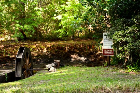 Img 20151113 111511338 picture of ravine gardens state park palatka tripadvisor for Ravine gardens state park in palatka fl