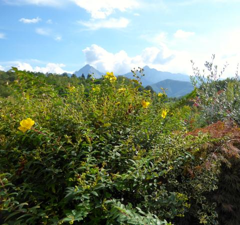 Casola in Lunigiana, Italy: The view from the restaurant.