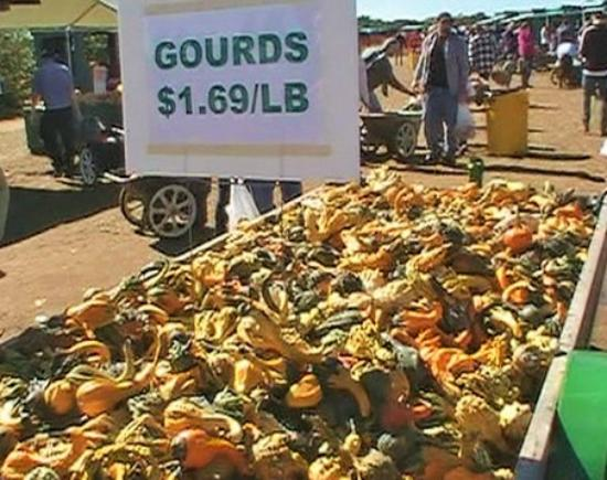 Colts Neck, NJ: Wagon full of colorful gourds at Eastmont Orchards