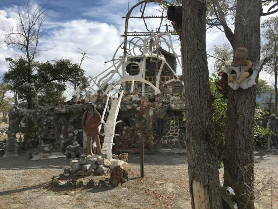 Imlay, NV: see the baby in the tree