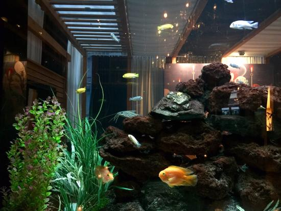 Fish tank in the restaurant picture of the strand hotel for Fish hotel tank