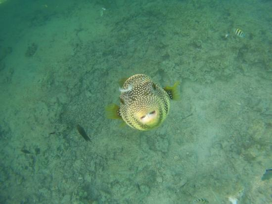You can see fish like this at the end of the hotel pier for Can fish see water