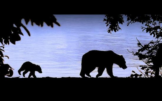 Brother Bear Excursions - Day Tours