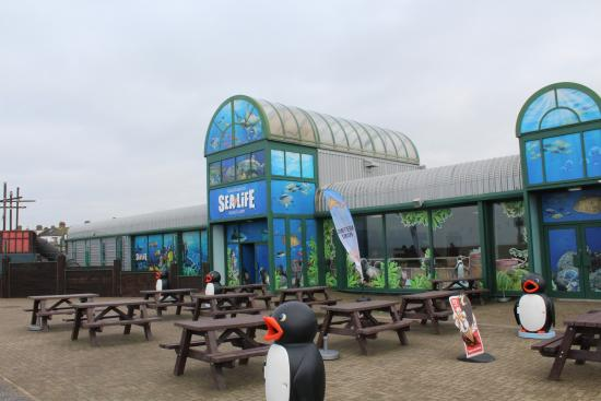 sea life center - Picture of Hunstanton Sea Life Sanctuary, Hunstanton ...