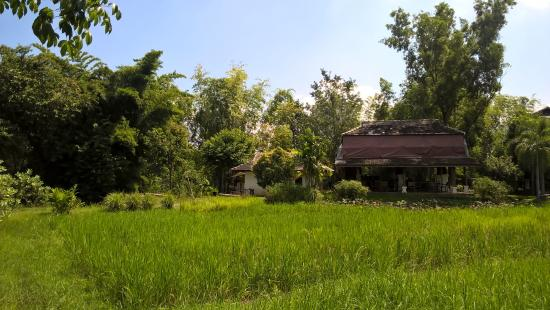The Puka Boutique Resort: A walk around the adjacent rice fields