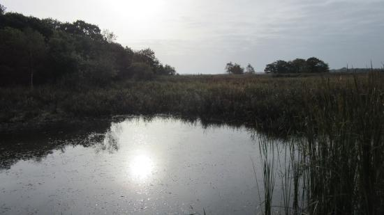 Hickling, UK: Out on the Broad