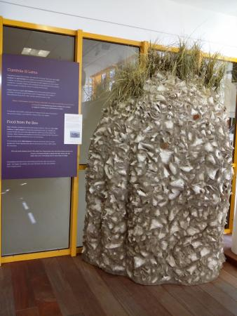 National Archaeological Museum Aruba: removed from the sea, a large like rock & shell formation