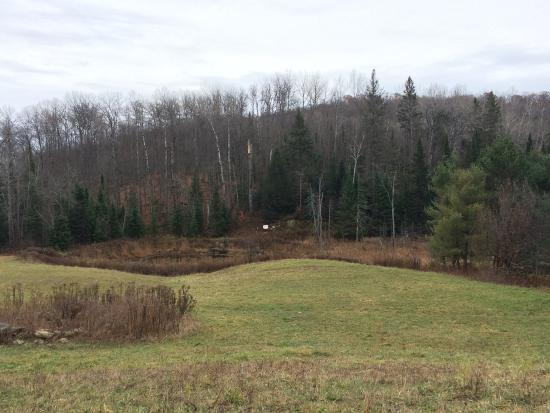 Burk's Falls, Canada: Need an ATM?  Zoom in on the sign at the edge of the clearing.
