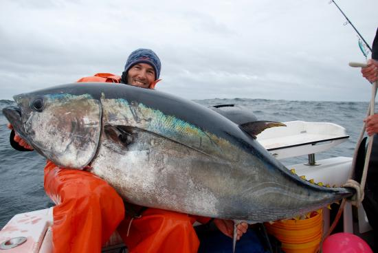 225 pound bluefin picture of reel deal fishing charters