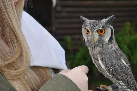 Machynlleth, UK: Getting up close to an owl