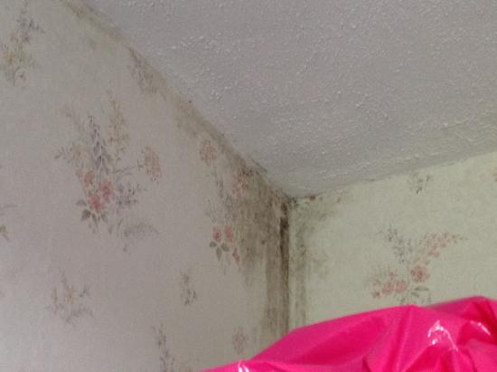 Ayrshire, UK: Double bedroom ceiling