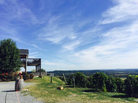 Bluemont vineyard, tasting room and shirt
