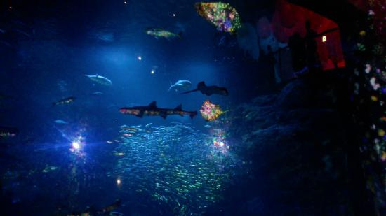 2015 August 20. Bild Projektion Shark Tank (pic low quality) - Picture of Eno...