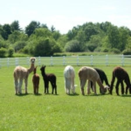 Groton, MA: The girls out in the Field