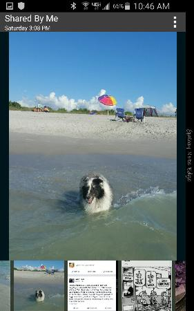 Venice, FL: Ellie finds heaven for dogs