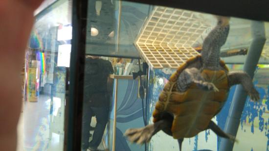 Marine Discovery Center: curious turtle