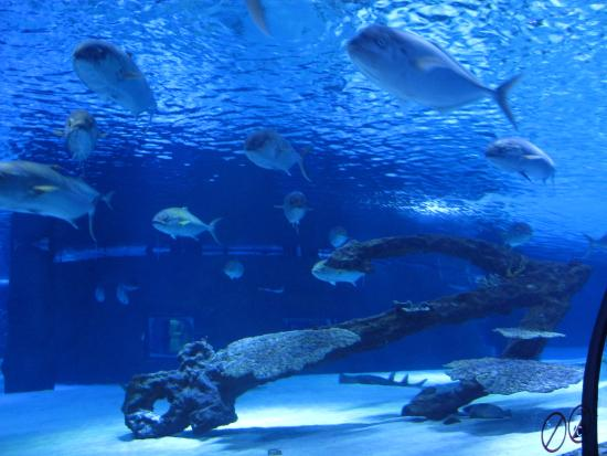 рыбки - Picture of Antalya Aquarium, Antalya - TripAdvisor