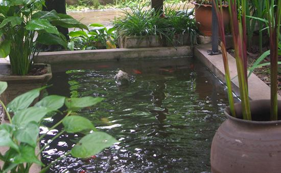 Lani Guest House: One of the House's pond