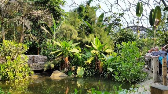 Tropical Rainforest Biome  Animal Facts and Information