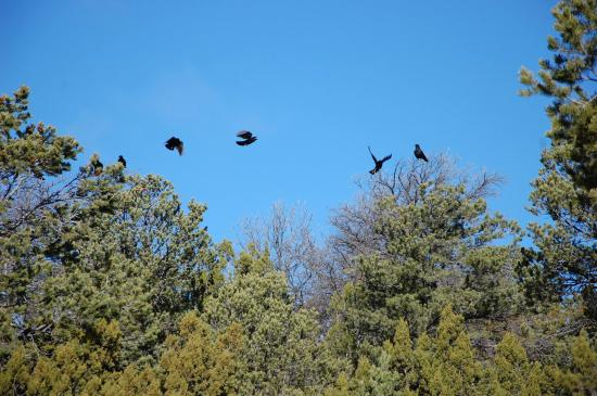 Edgewood, NM: Blue skies and crows...