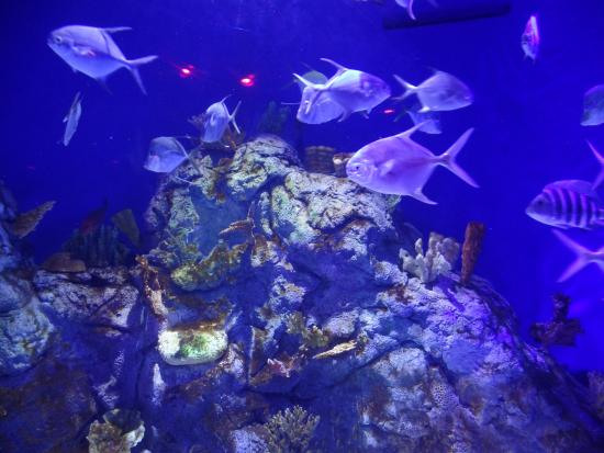 Aqu Rio Picture Of Sea Life Orlando Aquarium Orlando Tripadvisor