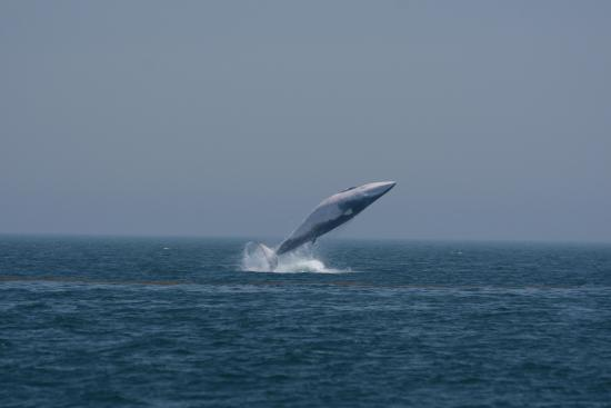 New Brunswick, Canada: Bay of Fundy whale