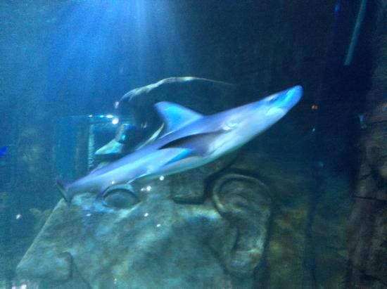 Sealife Picture Of Sea Life Orlando Aquarium Orlando Tripadvisor