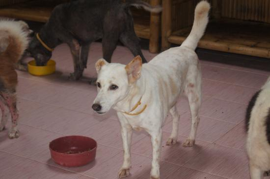 soi dog - Picture of Soi Dog Foundation, Phuket - TripAdvisor
