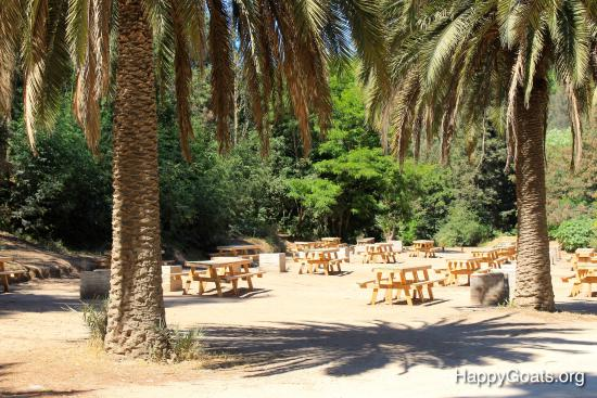 Picnic area with barbecue places picture of jardin for Jardin botanico vina