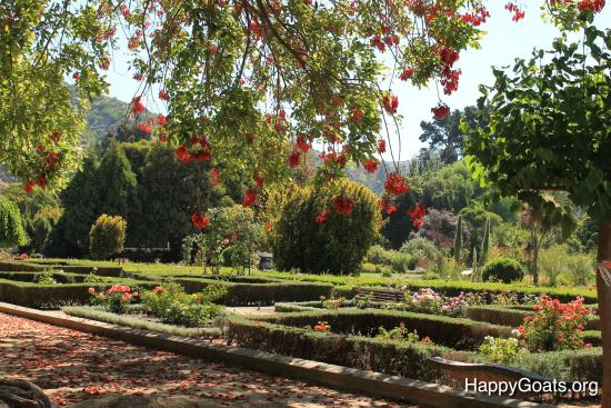 Beautiful rose gardens picture of jardin botanico for Jardin botanico vina