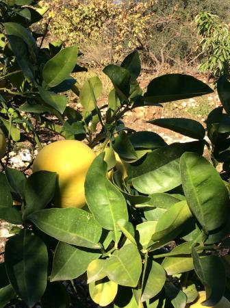 Shulamit Yard: Fruit trees in the orchard