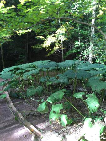 Clinton, NY: One of the interesting types of plants