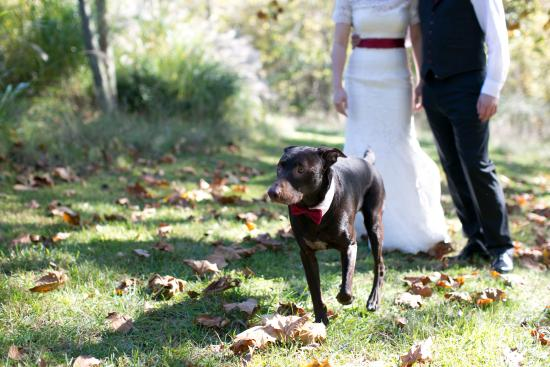 Lost River, WV: Two dog rooms are available...and having the dog in the wedding was mandatory.