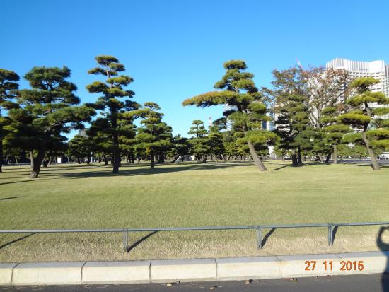 Местный обитатель - Picture of The East Gardens of the Imperial Palace (Edo C...