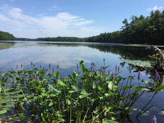 Hopkinton, MA: Lake Whitehall State Park - View From Pond Street
