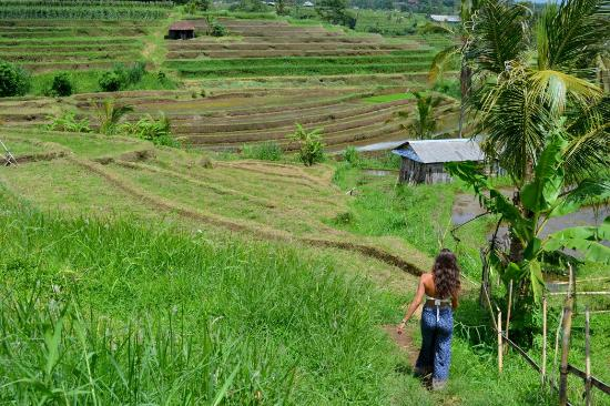 Dsc 1009 Large Jpg Picture Of Jatiluwih Green Land