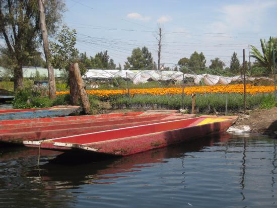Extensive Flower Gardens Picture Of Floating Gardens Of Xochimilco Mexico City Tripadvisor