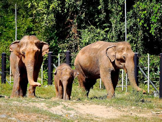 Gehege - Picture of Wildlife Friends of Thailand, Tha Yang ...
