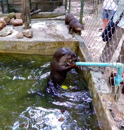 Ollie waiting for water - Picture of Wildlife Friends of ...