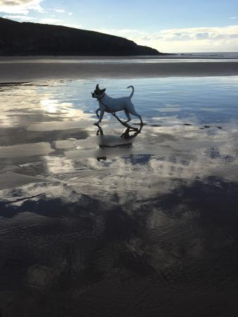 Dog Friendly Bb Vale Of Glamorgan Sea
